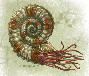 Ammonite by Onikaizer