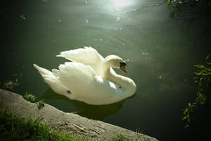 White Swan In The Lake by DiA-ADesign