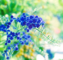 Blue magic flower by MadisonStar