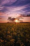 Appledore sundown by SevenHeptagons