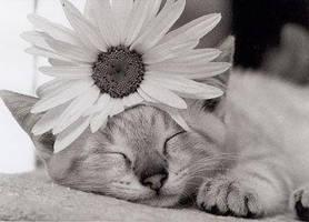 Kitten by Casey-Baby