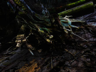 dead forest3 by jasonaych