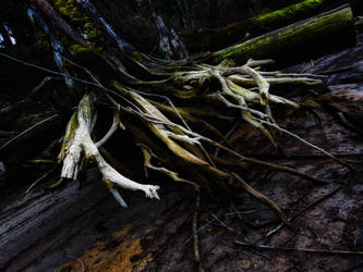 dead forest7 by jasonaych