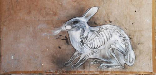 rabbit breath by StefanThompson