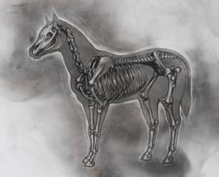 horsestudy by StefanThompson