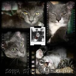 dead kitten collage by somastardust
