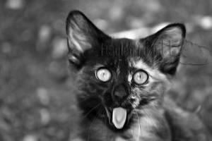 Catnip? by photographygrl