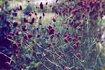 claret florets by Ifispirit