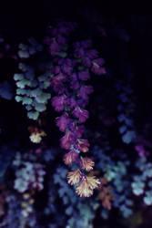 purple plant by Ifispirit