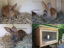 New rabbits arrived by Pattarchus