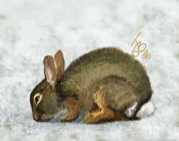 bunny by Astarsia