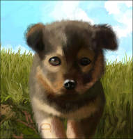 fluffy Puppy by Astarsia