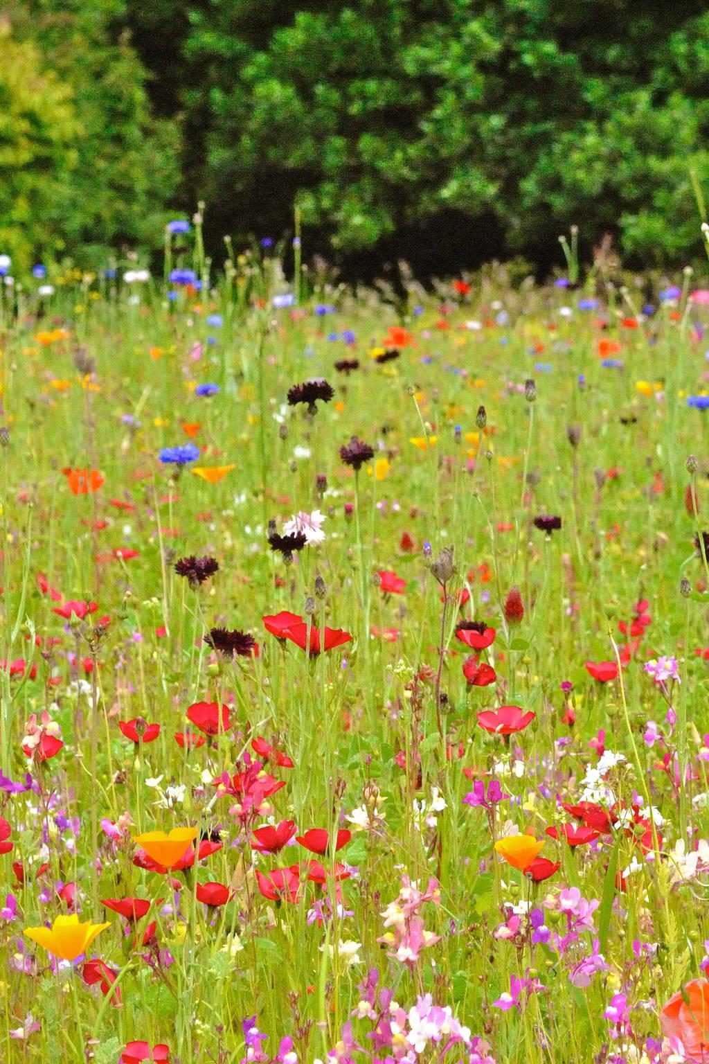 Wildflowers by Mez10000