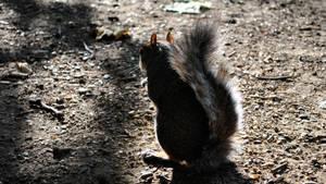Squirrel 1 by Mez10000