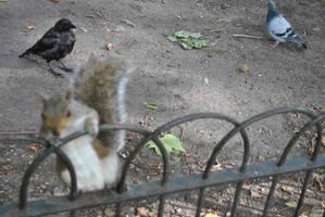 Squirrel 2 by Mez10000