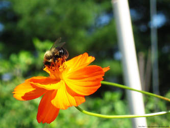 Busy Bee I by badcherry