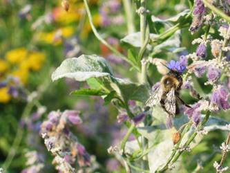 Busy Bee II by badcherry