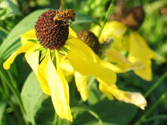 Busy Bee III by badcherry