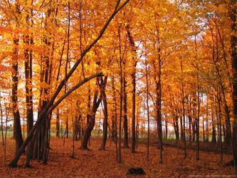 Yellow Fall Glory by badcherry