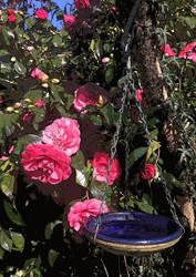 Rose and Bowl by Judan