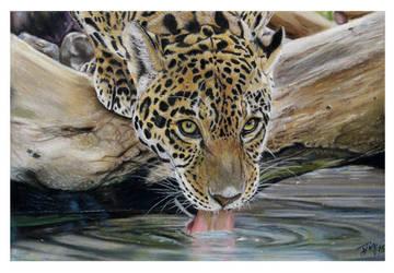 Jaguar by FreyjaSig