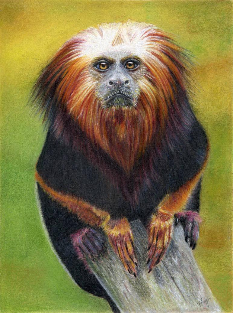 Colourful Monkey by FreyjaSig