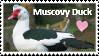 Muscovy Duck Lover by Fantia--Skies