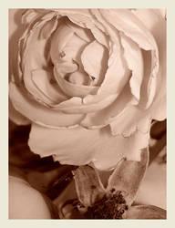 sepia rose by koffiekitten