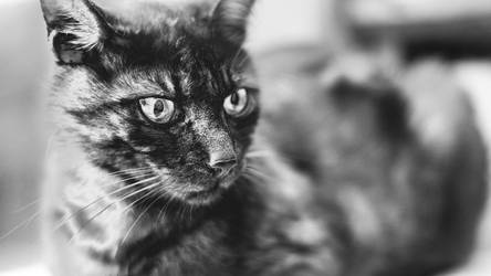 cat in chromeHD by utahjazz