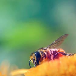bee it by utahjazz