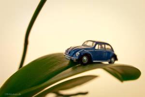 Beetle on a Leaf by UffeJakobsen