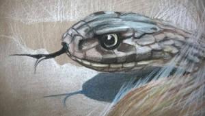 Dugite Snake study #2 by Lineke-Lijn