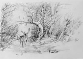 Deer in the woods - graphite drawing by Lineke-Lijn