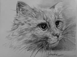 My Somali Cat in Charcoal by Lineke-Lijn
