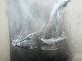 Big Humpback Whale charcoal drawing by Lineke-Lijn