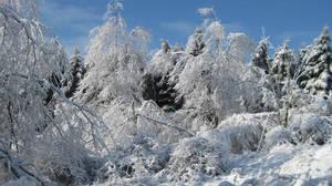 Snow Trees by nscmseiyaryu