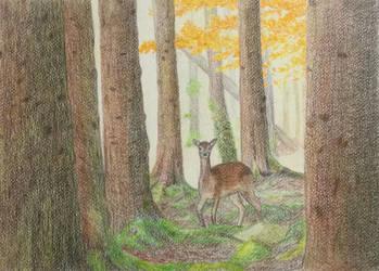 Deer by MisaelRubio
