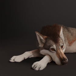 Wolfdog by Tsebresos