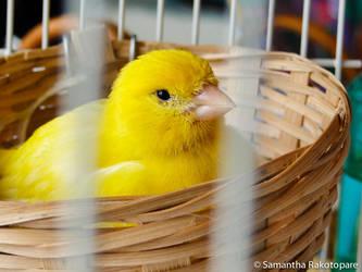 Pinou dans son nid by kitty974