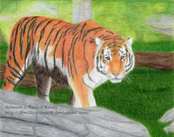 Amur Tiger on Patrol by 8TwilightAngel8