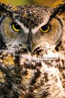 Great Horned Owl Face by 8TwilightAngel8