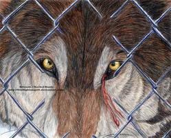 Haliburton Wolf Release - Sorrow by 8TwilightAngel8