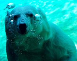Hes a Happy Bear by 8TwilightAngel8