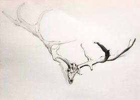 Stag skull by Odubon
