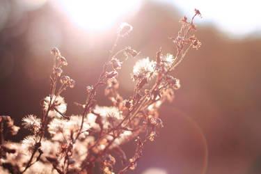 sunny autumn by eem-eine