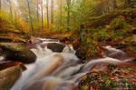 Mystic Autumn Forest by Dave-Derbis