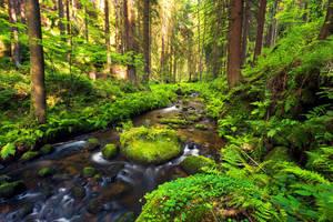 A River Runs Through It by Dave-Derbis