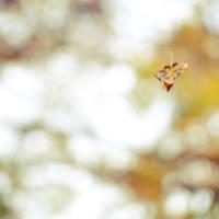 October. by anna-olivia