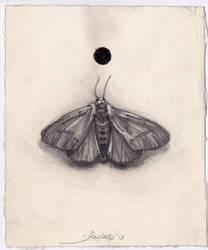 Moth by reinisgailitis
