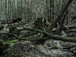Silence Between Storm by Spiritofdarkness